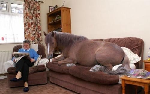 Horse on sofa